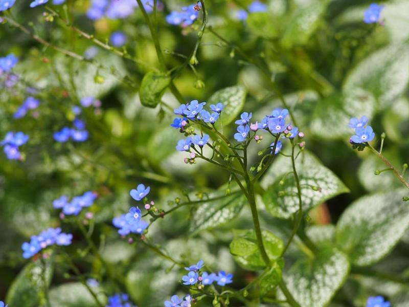 vaste planten border zon